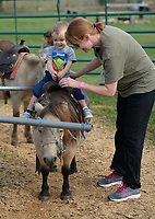 Heather Wing of Rogers secures her son, Bode Wing, 20 months, into a saddle Wednesday, Oct. 6, 2021, as he prepares to ride a miniature horse at Farmland Adventures in Springdale. The facility hosts a Mom's Day Out with reduced admission, which continues Oct. 11, 21 and 28. The attraction features hay rides, a corn maze, a petting zoo and is open through Nov. 6. Visit nwaonline.com/211007Daily/ for today's photo gallery.<br /> (NWA Democrat-Gazette/Andy Shupe)