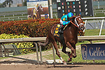 HALLANDALE BEACH, FL - FEB 3:  Strike Power #6 with Luis Saez on board wins the The Swale G3 at Gulfstream Park on February 3, 2018 in Hallandale Beach, Florida. (Photo by Liz Lamont/Eclipse Sportswire/Getty Images)