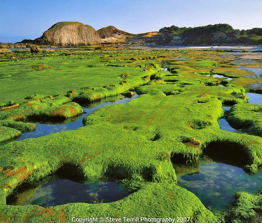 Algae covering sandstone formations at Seal Rock Beach in Lincoln County Oregon