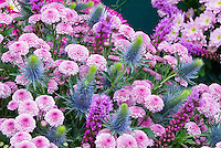 Liatris spicata, Chrysanthemum, Eryngium 'Super Nova Straight' flower floral arrangement in blue and pink color tones