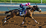 October 27, 2014:  Sweet Reason, trained by Leah Gyarmati, exercises in preparation for the DraftKings Breeders' Cup Filly & Mare Sprint at Santa Anita Race Course in Arcadia, California on October 27, 2014. John Voorhees/ESW/CSM