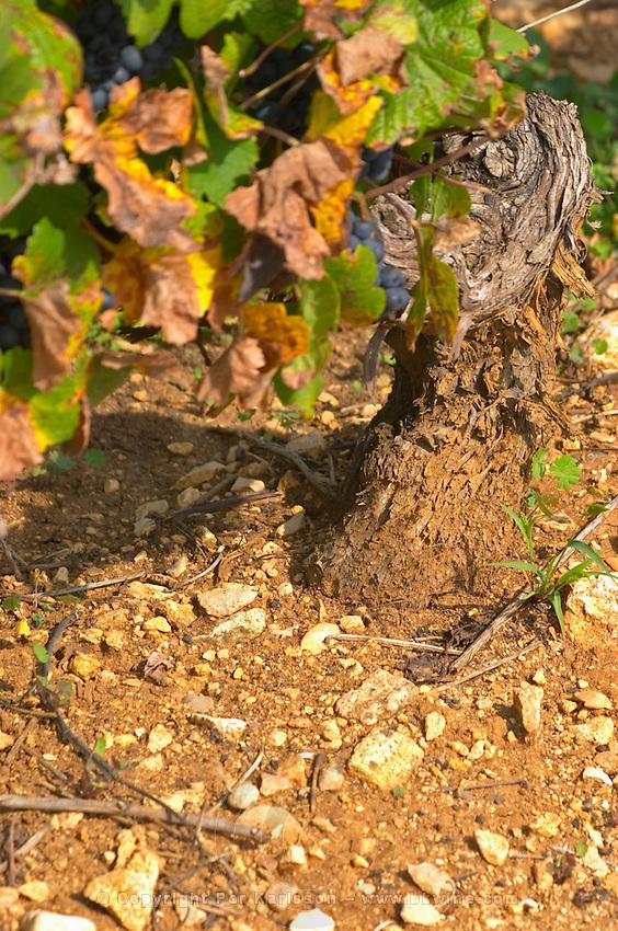 Soil detail. Stony. Sand. Pinot Noir. Beaune, Cote d'Or, Burgundy, France