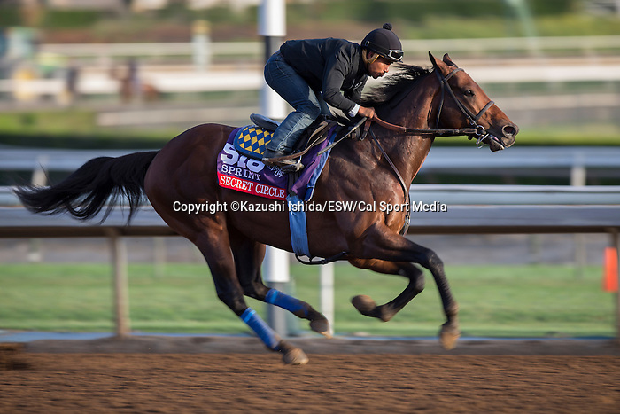 OCT 27 2014:Secret Circle, trained by Bob Baffert, exercises in preparation for the Breeders' Cup Xpressbet Sprint at Santa Anita Race Course in Arcadia, California on October 27, 2014. Kazushi Ishida/ESW/CSM