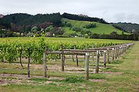 Vineyards near Gisborne, north island, New Zealand.