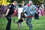 Beaverton City Police Department Officer Matt Barrington  watches K9 Officer Atlas, attack the bad guy during a demonstration during National Night Out at Beaverton City Park.<br /> Photo by Jaime Valdez