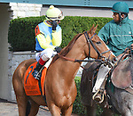 Dayatthespa (no. 7), ridden by John Velazquez and trained by Chad Brown, wins the 17th running of the grade 1 First Lady Stakes for fillies and mares three years old and upward on October 04, 2014 at Keeneland in Lexington, Kentucky.  (Bob Mayberger/Eclipse Sportswire)
