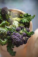 Gastronomie  Générale / Brocoli Sauvage bio //  General Gastronomy / Organic Wild Broccoli