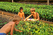 Juruena, Mato Grosso State, Amazon, Brazil. Boys inspecting tree seedlings at a reforestation project.