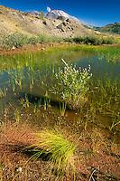 Hummocks Wetland and Mt. St. Helens, Mt. St. Helens National Volcanic Monument, Washington, US