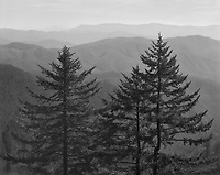 """""""Family Of Trees"""" <br /> Great Smoky Mountains National Park, North Carolina<br /> <br /> This image makes me imagine a """"family"""" of trees that includes a """"father,"""" """"mother"""" and """"child."""" The photograph was recorded from a pullout at high elevation on Clingmans Dome Road. The day was quite hazy and a medium yellow filter was used to reduce atmospheric haze somewhat but leave enough haze to contribute to the sense of depth in the photo."""