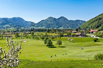 Deutschland, Bayern, Oberbayern, Chiemgau, Ruhpolding: Golfplatz und Hochfelln (1.671 m) im Fruehling | Germany, Bavaria, Upper Bavaria, Chiemgau, Ruhpolding: Golf course and Hochfelln mountain (1.671 m) in springtime