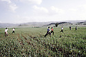 Irak 1992 Enfant jouant au football dans un champ à Halabja   Iraq 1992 Boys playing  football in a field near Halabja