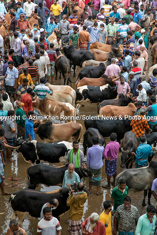 Pictured: Thousands of cows are lined up to be sold at a bustling cattle market.   The animals will then be sacrificed as part of the annual Eid al-Adha celebrations - otherwise known as the Festival of the Sacrifice. <br /> <br /> Farmers sell the cattle for between £500 to £5000 depending on size, with the highest price reaching £100,000 this year.   Photographer Azim Khan Ronnie pictured the cattle at the market in Bogra, Bangladesh.   SEE OUR COPY FOR DETAILS<br /> <br /> Please byline: Azim Khan Ronnie/Solent News<br /> <br /> © Azim Khan Ronnie/Solent News & Photo Agency<br /> UK +44 (0) 2380 458800