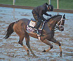October 28, 2015 :   Sweet Whiskey, trained by Todd A. Pletcher and owned by Alto Racing, exercises in preparation for the Breeders' Cup Filly & Mare Sprint at Keeneland Race Track in Lexington, Kentucky on October 28, 2015. Scott Serio/ESW/CSM