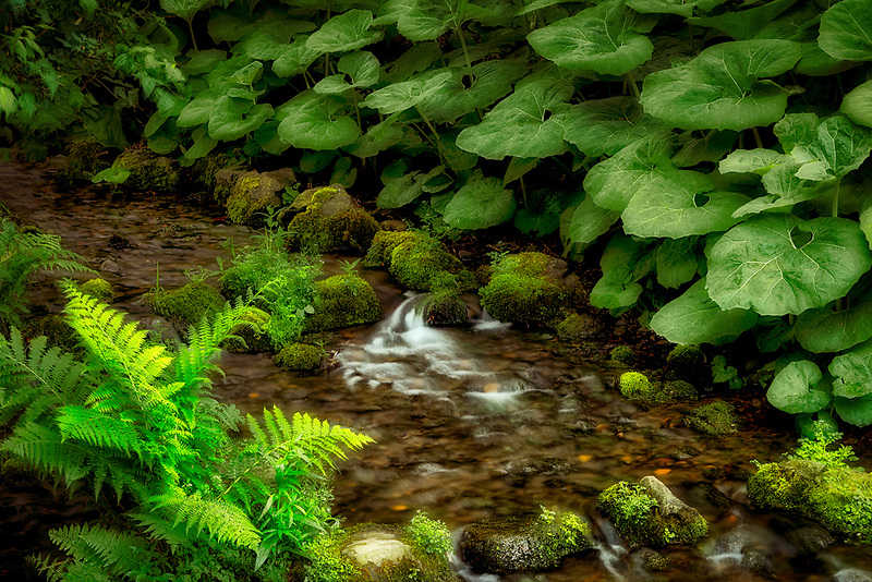 Small stream  in garden with spring growth. Crystal Springs Rhododendron Gardens, Oregon