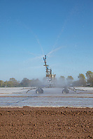 Irrigating fleeced crop with a reel and boom - Lincolnshire, April