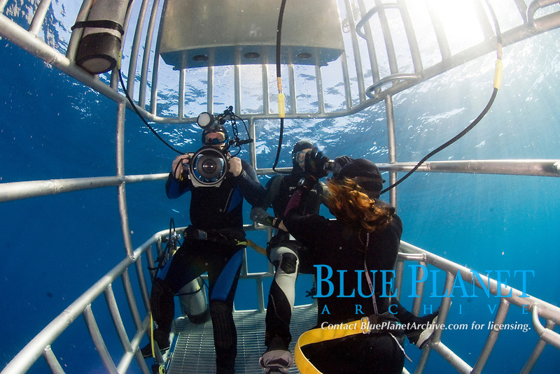 Underwater photographer and divers in a cage whilst diving with great white sharks in Isla Guadalope, Mexico