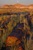 Petrified log and setting moon<br /> Long Logs<br /> Petrified Forest National Park<br /> Colorado Plateau,  Arizona