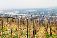 The Hermitage vineyards on the hill behind the city Tain-l'Hermitage, on the steep sloping hill, stone terraced. Sometimes spelled Ermitage. A view over the Rhone valley and river and the twin towns Tain Tournon. Tain l'Hermitage, Drome, Drôme, France, Europe