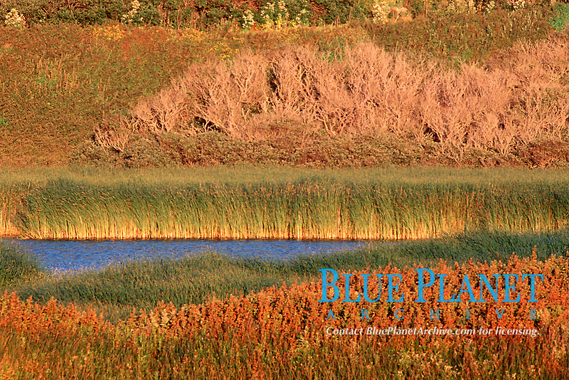 early morning light on the marshlands of Scott's Creek, just south of Davenport, California, East Pacific Ocean