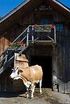 Oesterreich, Kaernten, Millstaetter See, oberhalb Millstatt: Kuhstall Villa Kunterbunt der Lammersdorfer Huette  | Austria, Carinthia, above Lake Millstatt: cowshed Villa Villekulla at Lammersdorfer Hut