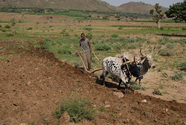 Ethiopia, altopiano nei dintorni di Addis Abeba, giovane con aratro