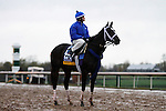 October 28, 2015:  Wedding Toast, trained by Kiaran McLaughlin, and owned by Godolphin Racing LLC, is entered in the Breeder's Cup Longines Distaff Grade 1 $2,000,000.  Candice Chavez/ESW/CSM