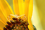 Small, Foliage Flower Spider on wildflower