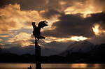 The silhouette of eagle perched on a tree in Kachemak Bay on the Kenai Peninsula in Alaska.