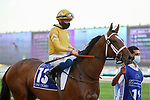 March 27, 2021: MNASEK, #13 in the post parade for the UAE Derby on Dubai World Cup Day, Meydan Racecourse, Dubai, UAE. Shamela Hanley/Eclipse Sportswire/CSM