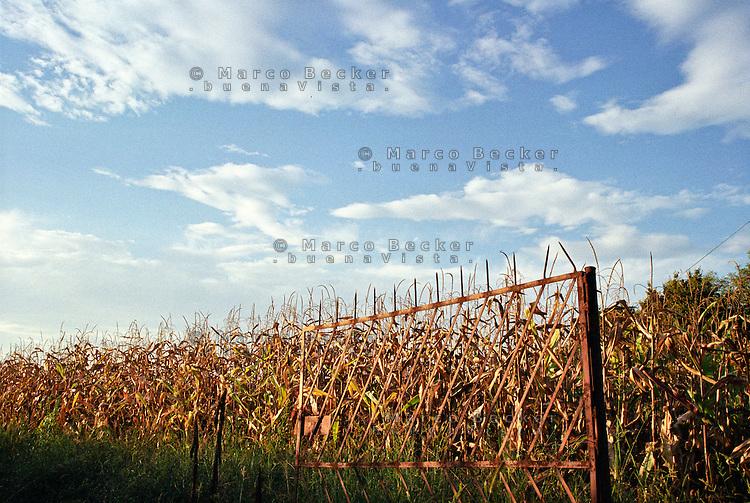 Cusago (Milano), Parco Agricolo Sud. Un vecchio cancello arrugginito davanti a un campo di granoturco --- Cusago (Milan), Rural Park South. An old rusty gate in front of a corn field