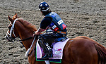 LOUISVILLE, KY - MAY 03: Heavenhasmynikki, trained by Anthony Quartarolo, exercises in preparation for the Kentucky Oaks at Churchill Downs on May 3, 2018 in Louisville, Kentucky. (Photo by John Vorhees/Eclipse Sportswire/Getty Images)