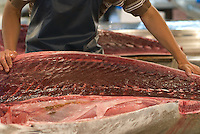 A wholesaler at Tsukiji Fish Market cuts a tuna bought at auction a few minutes previously, July 16, 2008. On Tuesday, July 15 the Japanese fishing fleet stayed in port to protest gasoline prices, and on the Wednesday there were many fewer fish than usual for sale at the famous tuna auctions. Tokyo, Japan