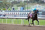 February 11, 2012. Bodemeister by Empire Maker breaks his maiden under jockey Rafael Bejarano at Santa Anita Park in Arcadia, CA.