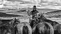 old time cowboy roping horses