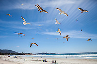 Seagulls fly above a beach in Carmel, CA.