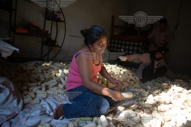 War survivor Juana Lorenzo, 45, selects and cleans ears of corn recently harvested in the 15 de Octubre La Trinidad community. Behind her are her husband Leocadio Camposeco (standing), 54, and father-in-law Antonio Camposeco, 85. All three are war survivors from Huehuetenango who have lived the community's plight as refugees in Mexico, returnees, and now victims of Fuego Volcano. She states: ''I came back in March because of the coronavirus. Over there, in the ATUs, we were so crammed, and since this is so contagious, well you can imagine. We were sharing bathrooms and the kitchen is so far from our unit. It is really hard being over there, I felt as if I was being punished and we didn't have anywhere to grow food. And with this virus, well we had no choice but to come back despite the volcano. Yes, I am scared. Very scared. I get really nervous. But we don't have any income and over there we must buy everything to eat. Us campesinos like to work the land, it feeds us. From here we will continue to fight for our right to have a community landholding.''