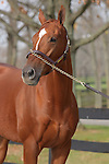 09 November  2009 Fasig TIpton November Breeding Stock sale.  Hip #120 Magical Fantasy, consigned by Eaton Sales.  Magical Fantasy, a multiple Graded Stakes winner, with earnings of $859,231.