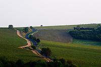 Winding road through vineyards.