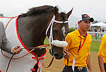 May 18, 2013, Oxbow leaves the track after winning the 138th Preakness Stakes at Pimlico Race Course in Baltimore, MD.   (Joan Fairman Kanes/Eclipse Sportswire)