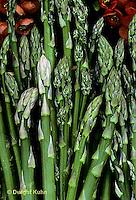 HS20-005c  Asparagus - harvested, perennial - Jersey Centennial variety.