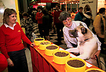 Pet food samples dog trying different bowls of food. Promotion at Crufts Dog Show National Exhibition Centre Birmingham 1991 1990s <br /> <br /> A JAPANESE AKITA CALLED KALLY