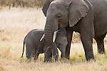 An elephant nuzzles her young in Masai Mara, Kenya.