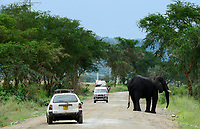 UGANDA, Kasese, Queen Elizabeth Nationalpark, elephant on the public road / Elefant auf Strasse durch den Queen Elizabeth Nationalpark