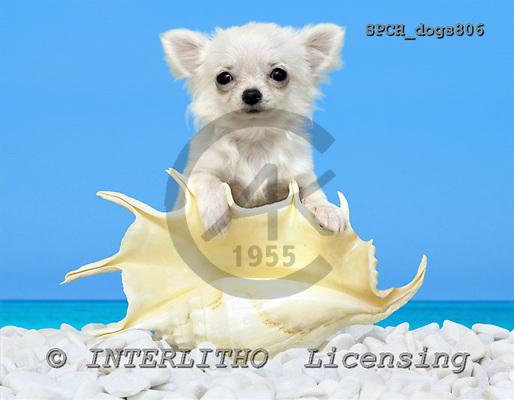 Xavier, ANIMALS, dogs, photos, SPCHdogs806,#A# Hunde, perros