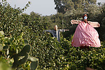 A scarecrow is installed in a vineyard in Gaza City, on July 16, 2020. Photo by Osama Baba