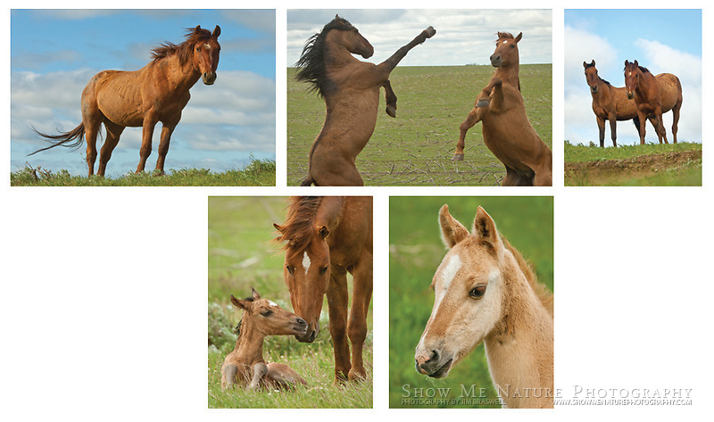 """Boxed set of 10 Wild Horse note cards (folded, blank inside), 2 of each of the pictured images, and 10 blank, white envelopes. To purchase, click on image until a """"Buy"""" button appears above the image."""