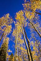 Telluride, CO Fall Aspen Colors
