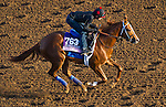October 27, 2014:  Majestic Presence, trained by Jerry Hollendorfer, exercises in preparation for the 14 Hands Winery Breeders' Cup Juvenile Fillies at Santa Anita Race Course in Arcadia, California on October 27, 2014. John Voorhees/ESW/CSM