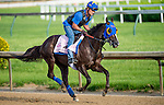 LOUISVILLE, KY - MAY 02: Venus Valentine, trained by Tom Amoss, exercises and prepares during morning workouts for the Kentucky Derby and Kentucky Oaks at Churchill Downs on May 2, 2016 in Louisville, Kentucky. (photo by Scott Serio/Eclipse Sportswire/Getty Images)